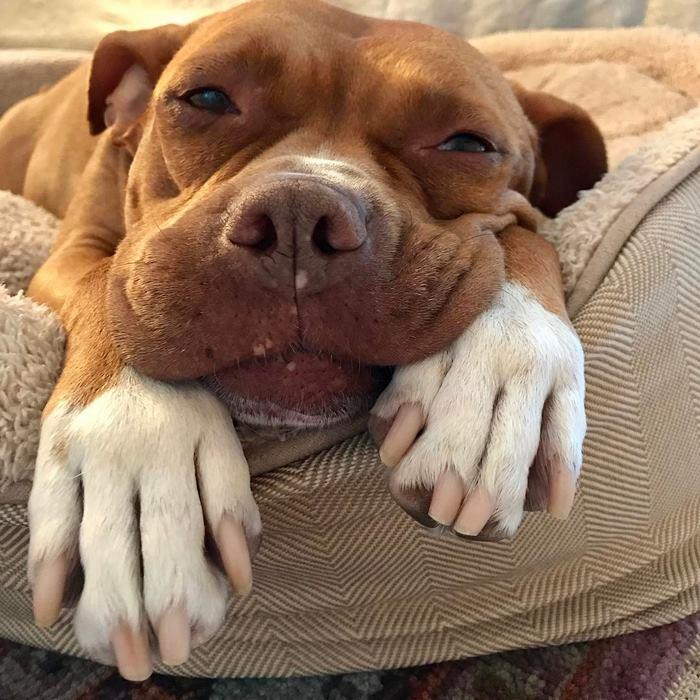 A kutya 8 évig egy garázsban volt kiláncolva7