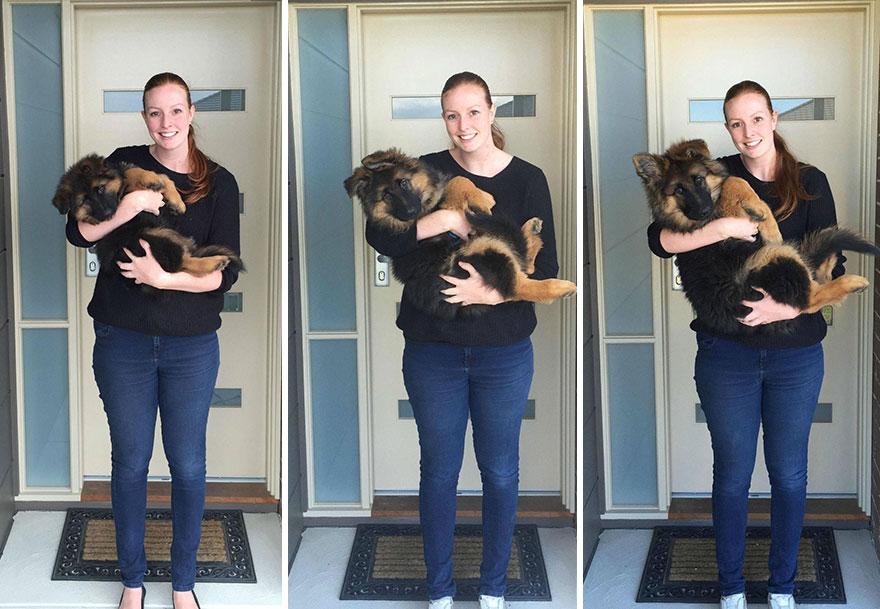 A pár nem hitte el, hogy a kutyájuk ekkora lesz1