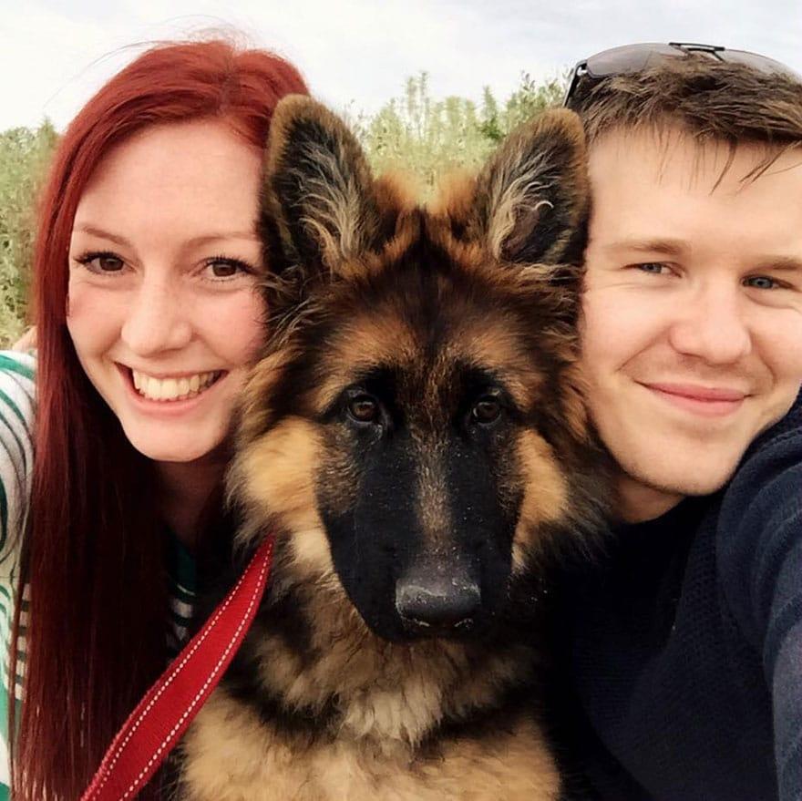 A pár nem hitte el, hogy a kutyájuk ekkora lesz4