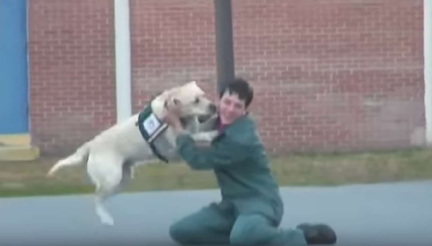 A veterán börtönbe vitte a szolgálati kutyáját2
