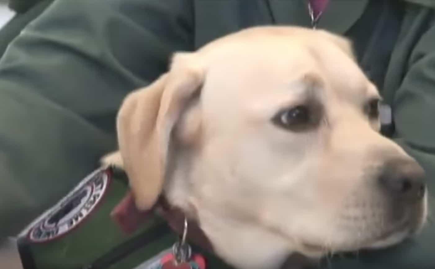 A veterán börtönbe vitte a szolgálati kutyáját3