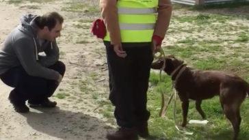 Az elveszett kutya