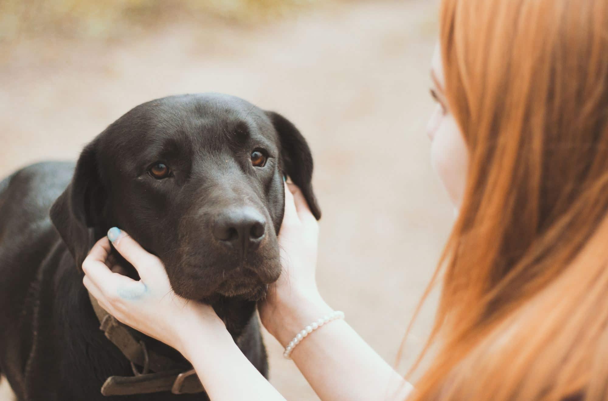 Jobban szeretik a kutyákat az emberek, mint egymást1