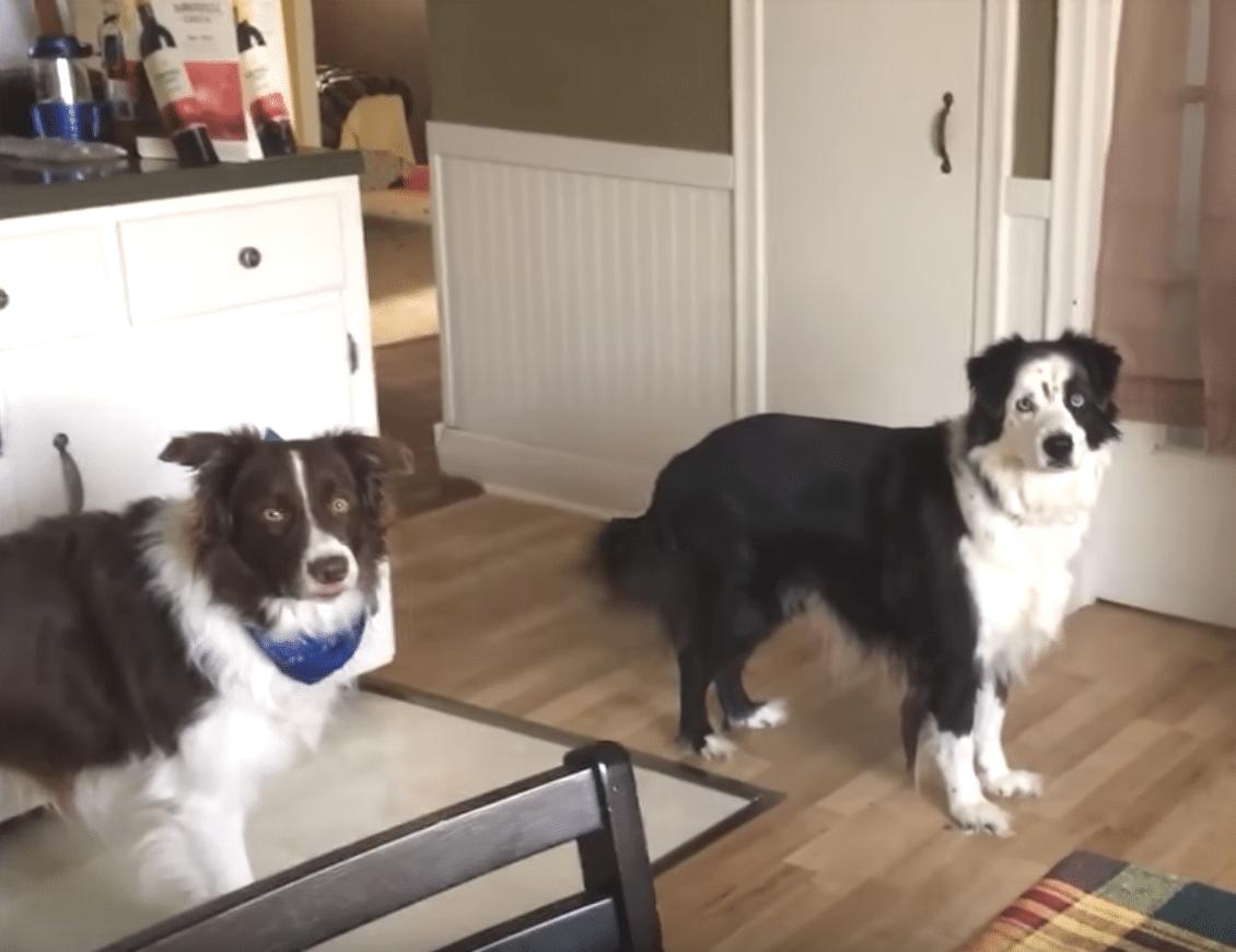kutya hisztizik a nem szóra3