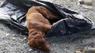 Összekötözve hagyták a kutyát egy szemeteszsákban a folyóparton