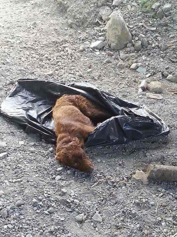 Összekötözve hagyták a kutyát egy szemeteszsákban a folyóparton1