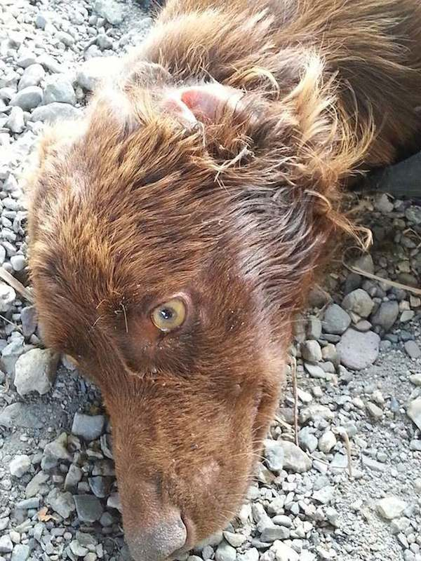 Összekötözve hagyták a kutyát egy szemeteszsákban a folyóparton3
