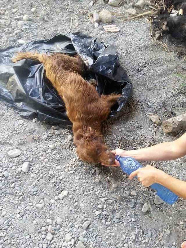 Összekötözve hagyták a kutyát egy szemeteszsákban a folyóparton4
