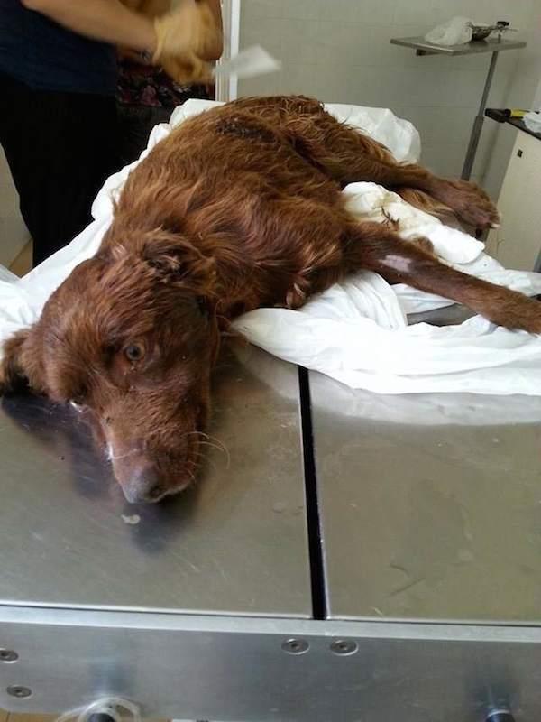 Összekötözve hagyták a kutyát egy szemeteszsákban a folyóparton5