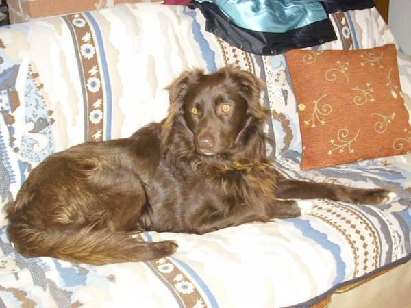 Összekötözve hagyták a kutyát egy szemeteszsákban a folyóparton7