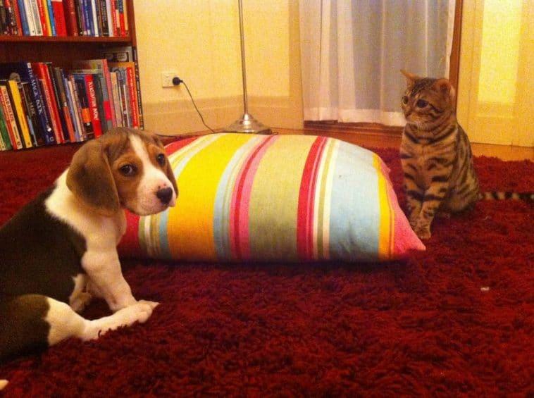 10 kiskutya, aki teljesen kiborította a család macskájá2