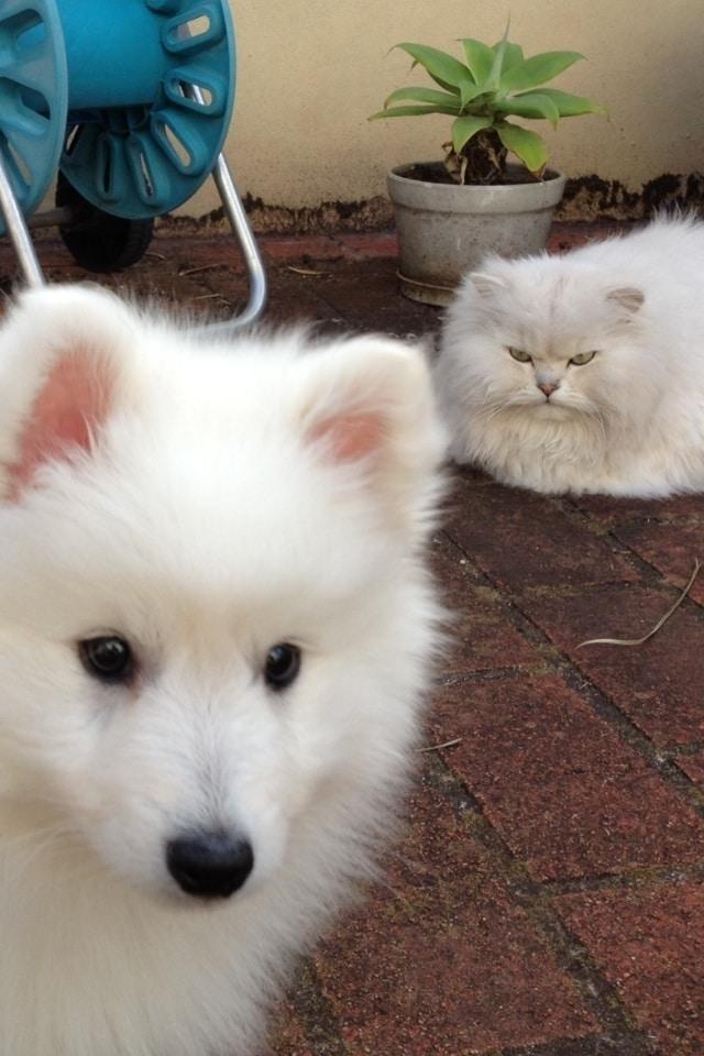 10 kiskutya, aki teljesen kiborította a család macskájá3