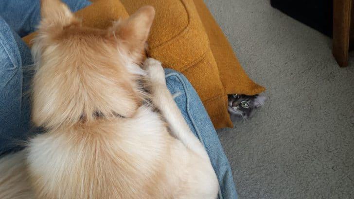 10 kiskutya, aki teljesen kiborította a család macskájá5