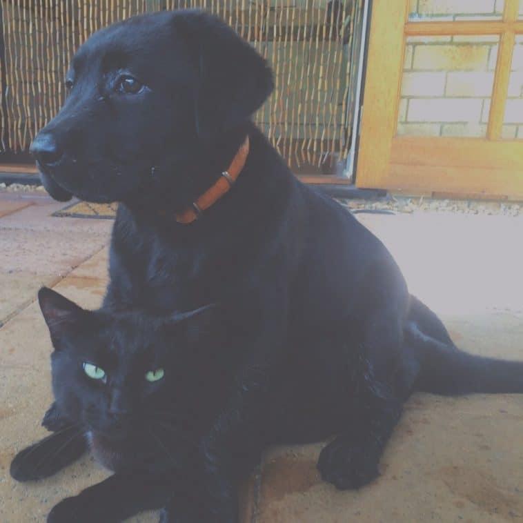 10 kiskutya, aki teljesen kiborította a család macskájá9