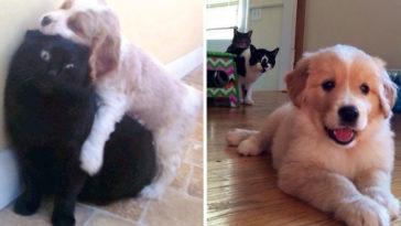 10 kiskutya, aki teljesen kiborította a család macskáját