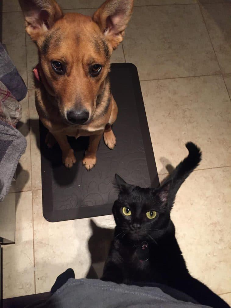 12 kutya, aki nem ismeri a pofátlanság fogalmát3