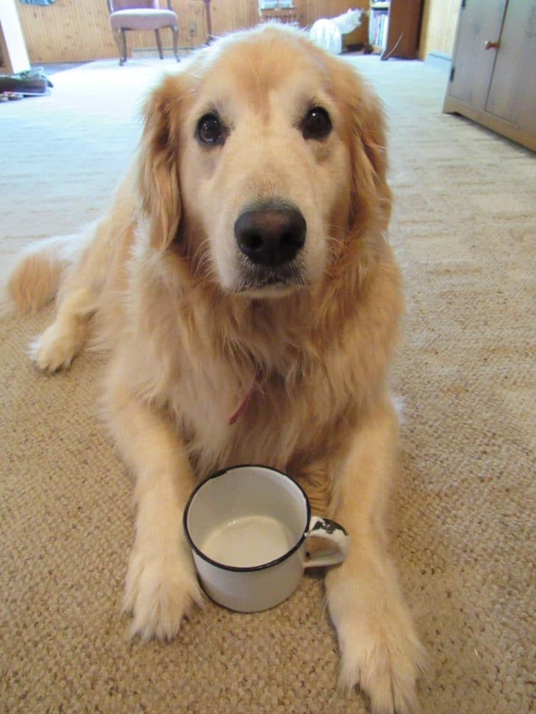 12 kutya, aki nem ismeri a pofátlanság fogalmát6