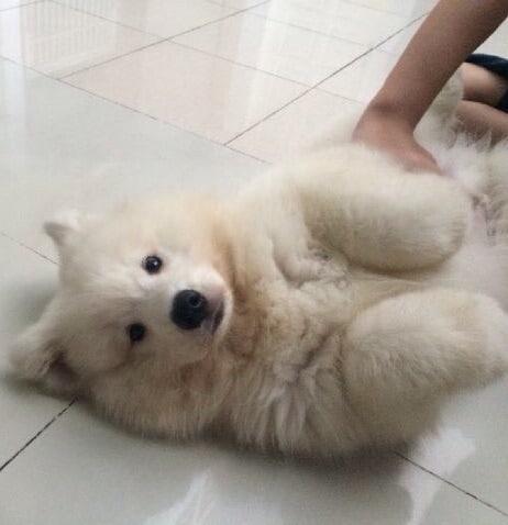 12 kutya, aki nem ismeri a pofátlanság fogalmát7