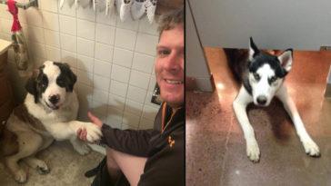 12 pofátlan kutya, aki még a wc-re sem engedi el egyedül a gazdáját