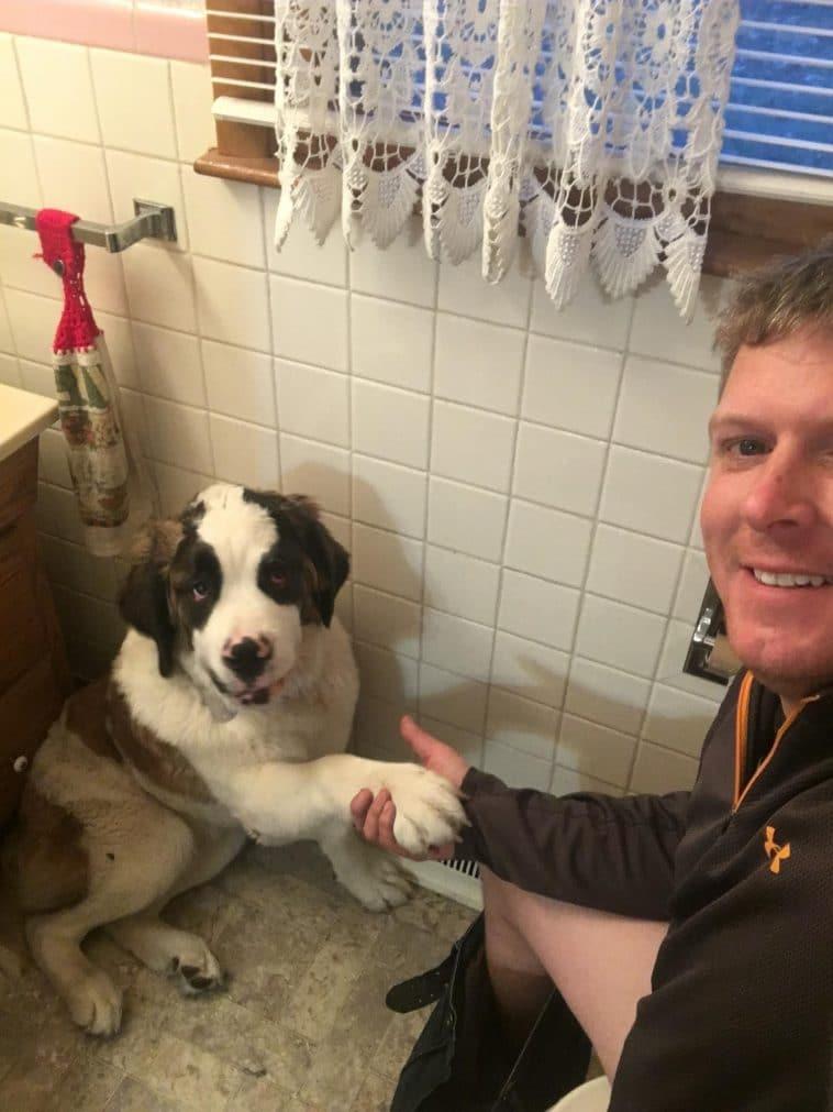 12 pofátlan kutya, aki még a wc-re sem engedi el egyedül a gazdáját2