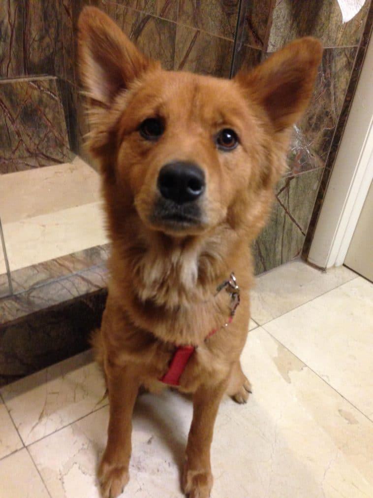 12 pofátlan kutya, aki még a wc-re sem engedi el egyedül a gazdáját3