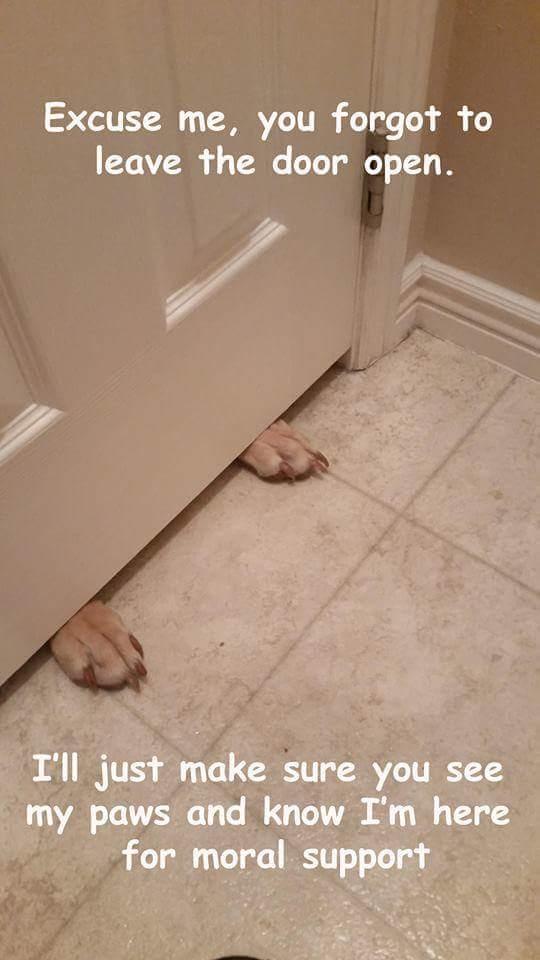 12 pofátlan kutya, aki még a wc-re sem engedi el egyedül a gazdáját7