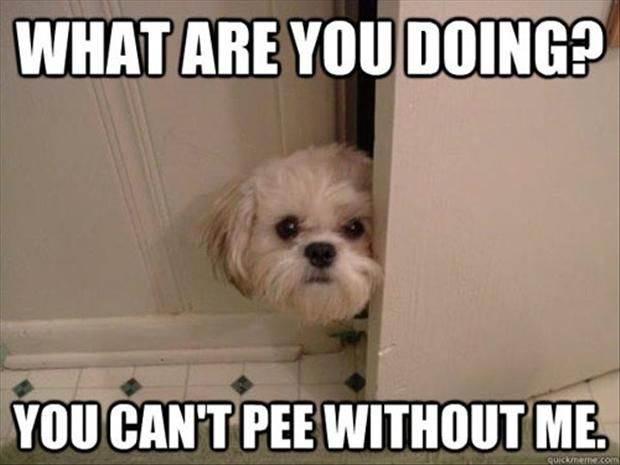 12 pofátlan kutya, aki még a wc-re sem engedi el egyedül a gazdáját9