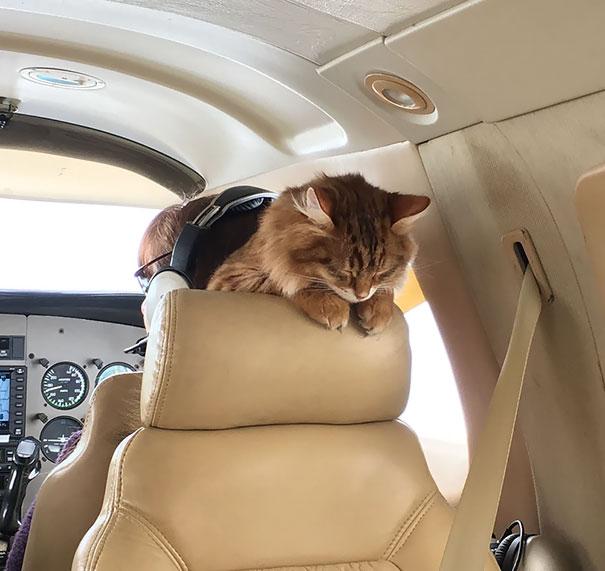 15 útitárs, akivel szívesen utaznál egy repülőn11