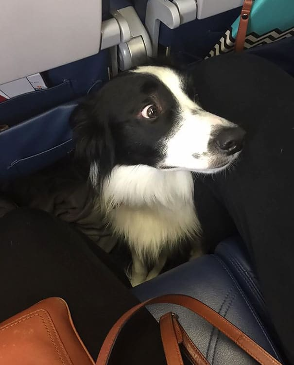 15 útitárs, akivel szívesen utaznál egy repülőn3