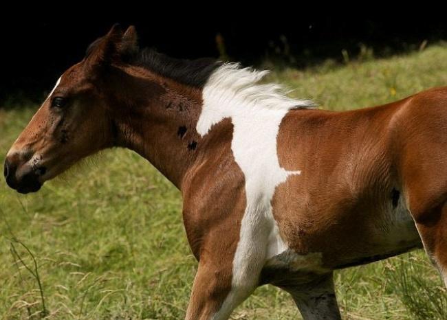 16 állat, akiknél igencsak kreatív kedvében lehetett a természet4