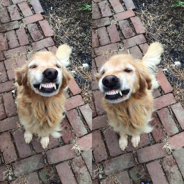 16 mosolygós kutyus1