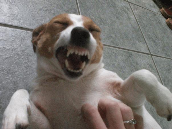 16 mosolygós kutyus11