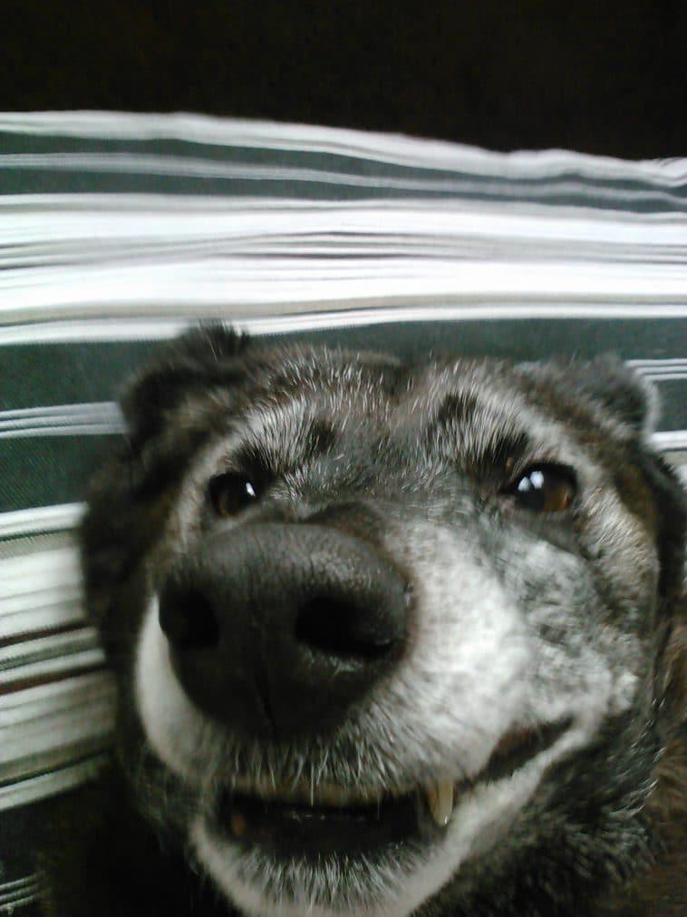 16 mosolygós kutyus14