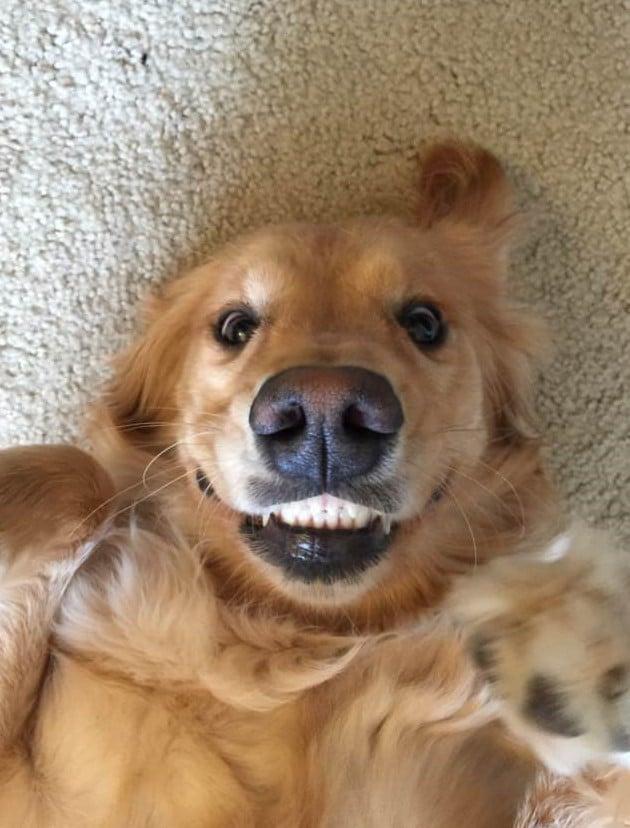 16 mosolygós kutyus15