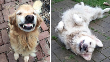 16 mosolygos kutya
