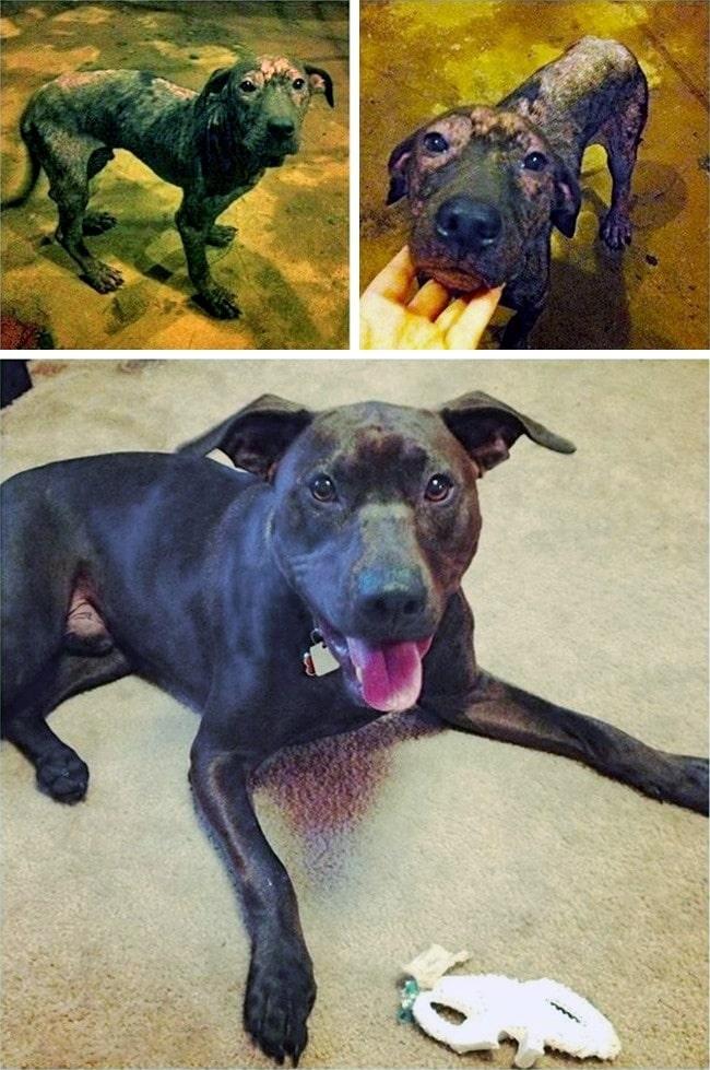 20 előtte és utána kép örökbe fogadott kutyákról10