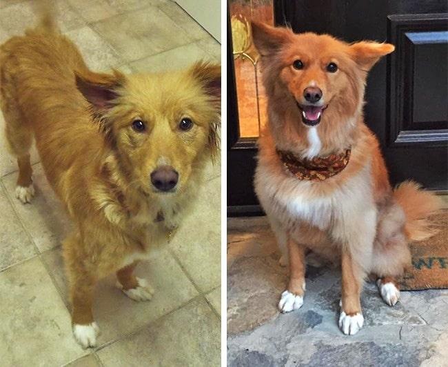 20 előtte és utána kép örökbe fogadott kutyákról11