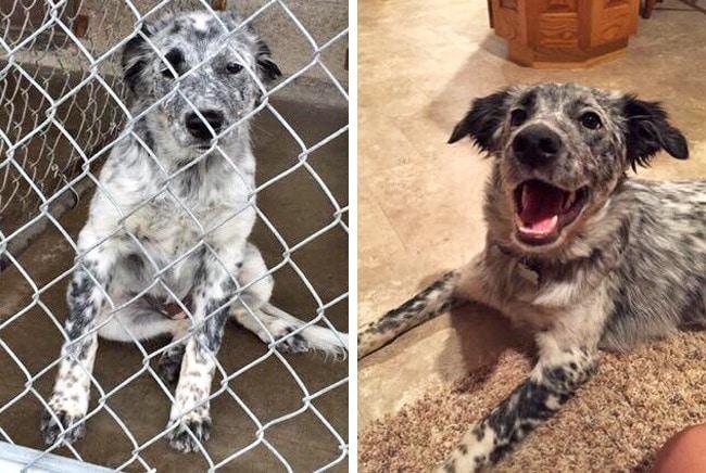 20 előtte és utána kép örökbe fogadott kutyákról13