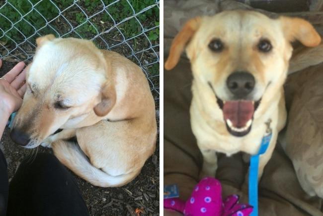 20 előtte és utána kép örökbe fogadott kutyákról14
