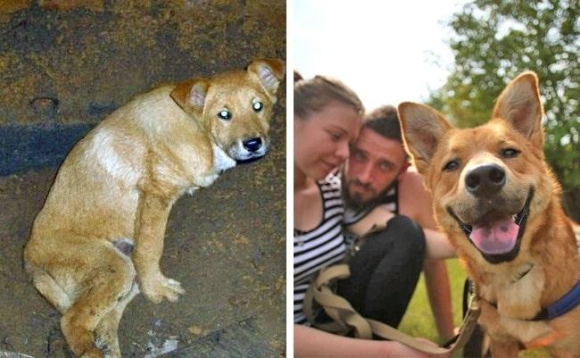 20 előtte és utána kép örökbe fogadott kutyákról15