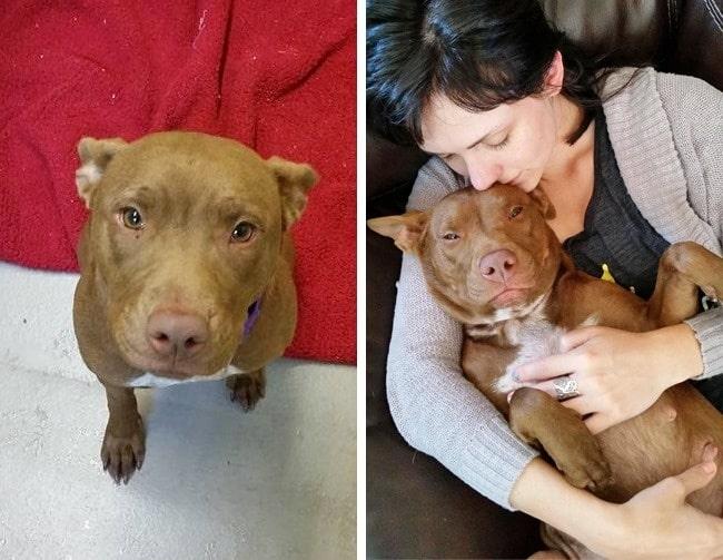 20 előtte és utána kép örökbe fogadott kutyákról16
