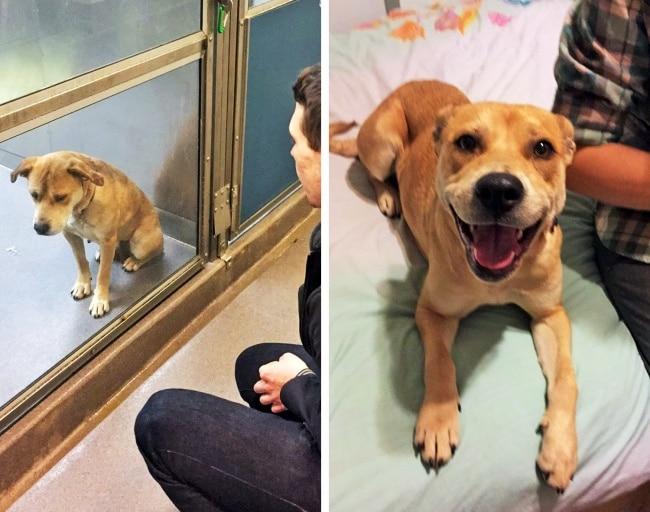 20 előtte és utána kép örökbe fogadott kutyákról2
