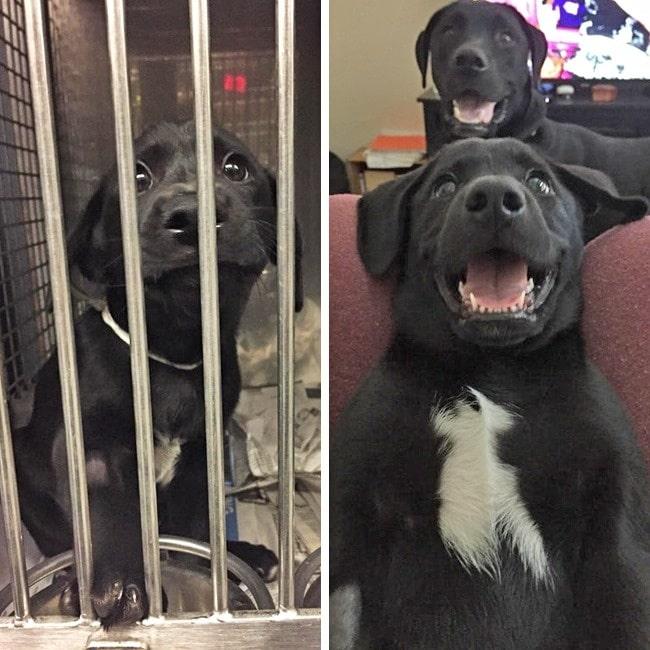 20 előtte és utána kép örökbe fogadott kutyákról3