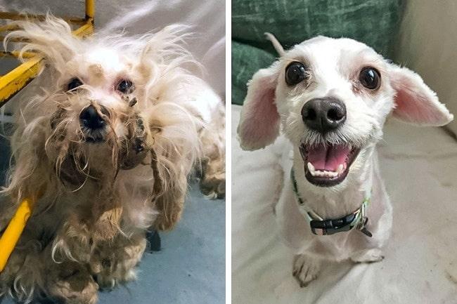20 előtte és utána kép örökbe fogadott kutyákról4