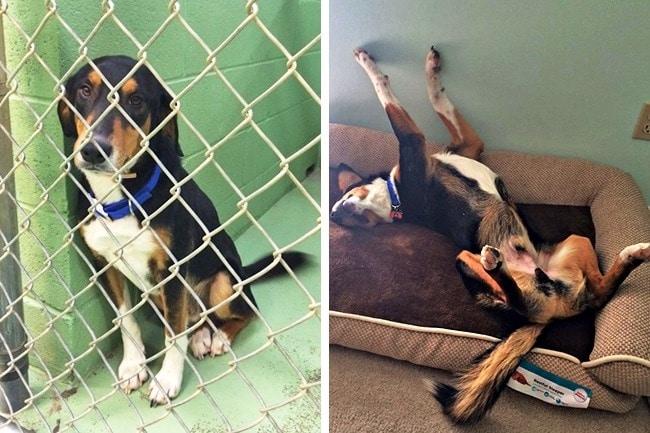 20 előtte és utána kép örökbe fogadott kutyákról6