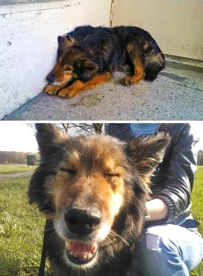 20 előtte és utána kép örökbe fogadott kutyákról9
