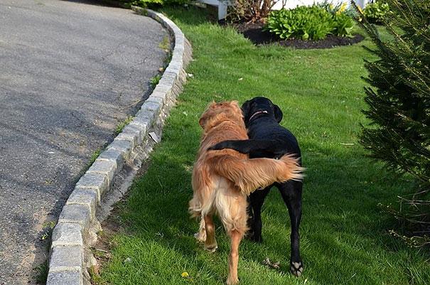 21 kutya barátság10