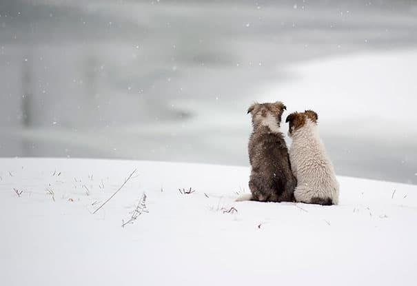 21 kutya barátság12