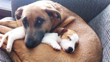 21 kutya barátság13