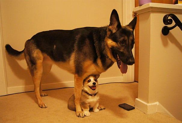 21 kutya barátság19
